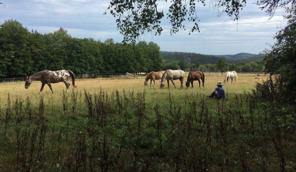 Pferdemensch-Kurs Nina Fischer
