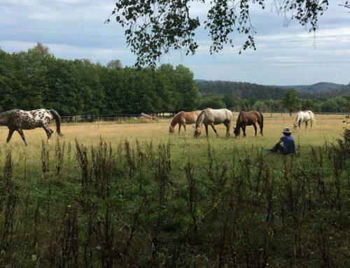 'Pferdemensch' – ein Seminar zur Persönlichkeitsentwicklung: mein Erfahrungsbericht