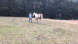 Pferdemensch-Kurs-Nina-Fischer-12