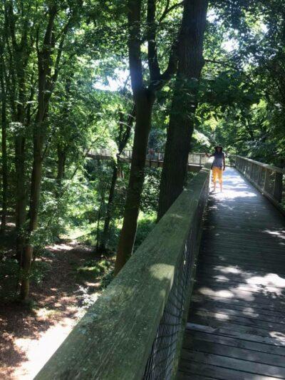 Die ersten Meter ohne Höhenangst auf dem Baumwipfelpfad Rügen
